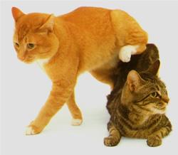 looney toons cat